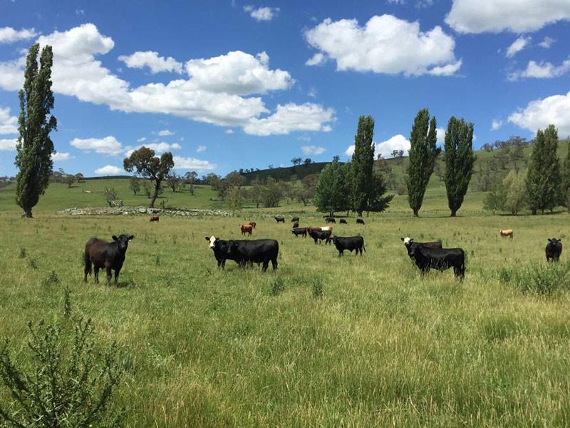 Jackson Agriculture and Lee Pratt Beef